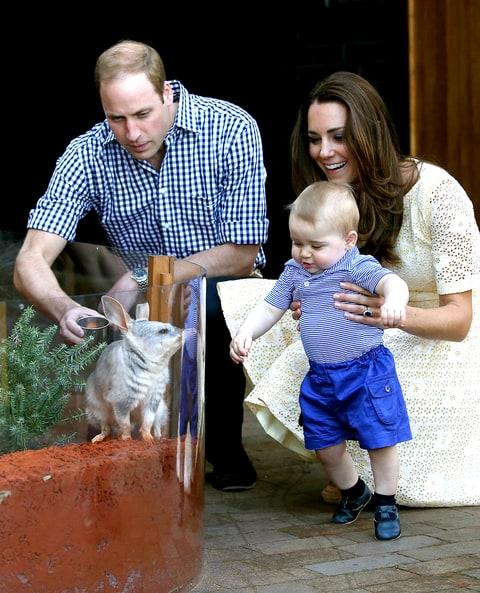 zoo weekly australia magazine pdf