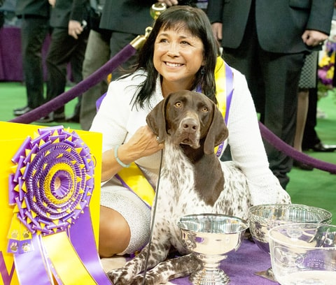 Westminster Dog Show 2016: First Night Winners