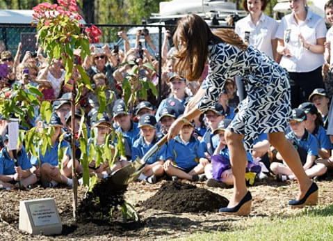 kate planting a tree