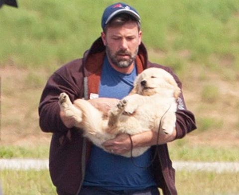 Ben Affleck with puppy