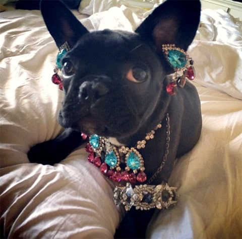 Lady Gaga dog 2