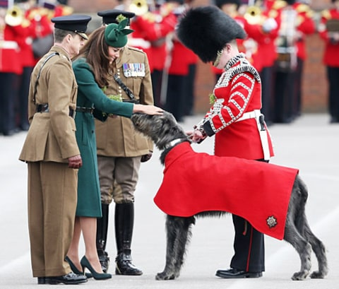 kate middleton dog