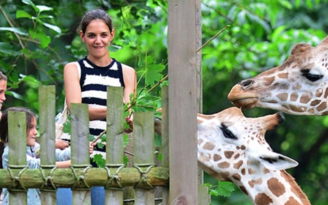 Katie & Suri Feed the Giraffes