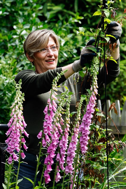 Marianne Bays works in a flower garden at her home Friday, May 28, 2010, in Montclair, N.J. After decades as a business consultant, Marianne Bays is tired of the corporate world and wants to try a new career. She wants to be your ill grandfather's pot dealer. And she wants to do it legally. In January, New Jersey became the 14th state to allow medical marijuana. The law goes into effect July 1, but it's likely to take several months after that before the state has regulations written and in place. For now, Bays and others are quietly setting up nonprofit groups that will submit applications to run the first treatment centers. (AP Photo/Mel Evans)