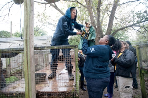 Animal-welfare advocates and local law enforcement rescue dogs at a puppy mill in Pender County, N.C.
