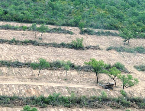 deforestation Gran Chaco Forest Paraguay