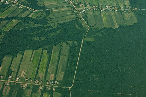 Chaco  Paraguay South America being deforestation