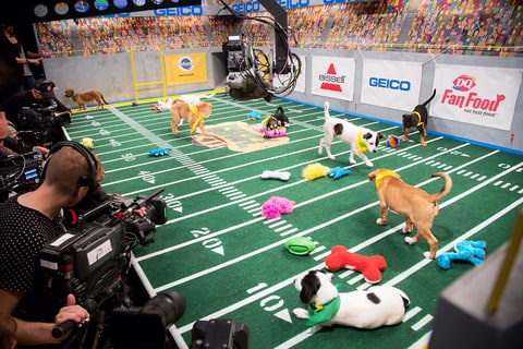 Puppy Bowl XII; Puppies; Cute