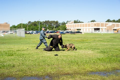 Petty Officer David Fuller practices patrol techniques with his assigned canine Misa at Dam Neck Fleet Training Center.  Fuller acts out a different scenario with his colleague in the protective suit every time to help give a sense of practical realism to the excersize.