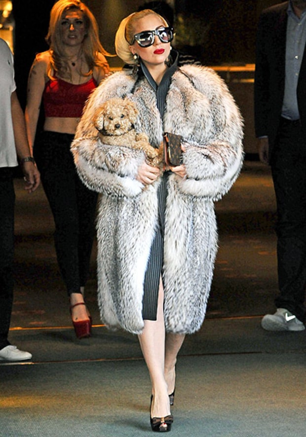 Furry Gaga, Furry Friend