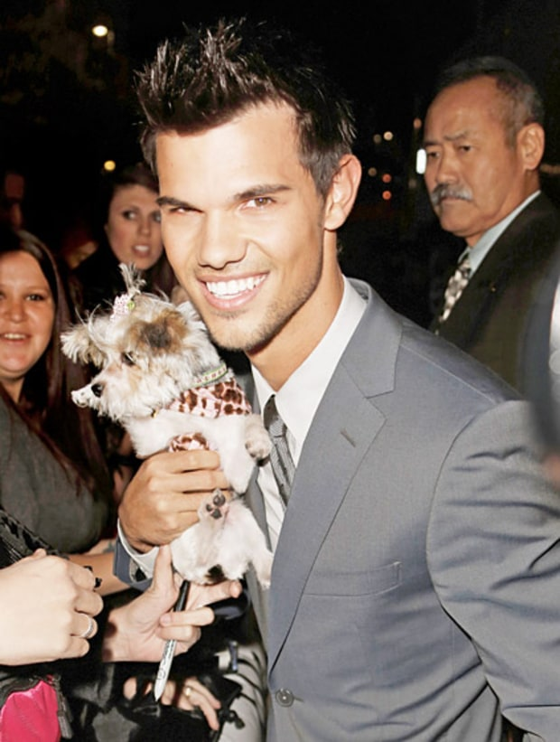 Taylor's Puppy Love