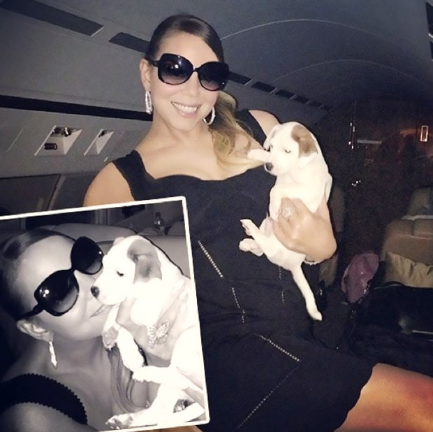 Mariah Carey and Her Jack Russell Terriers