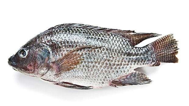 U.S. Farmed Tilapia