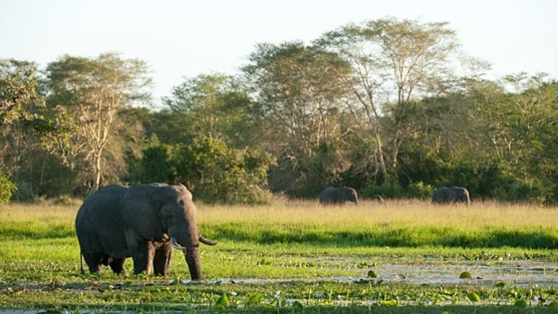 Gorongosa National Park, Mozambique