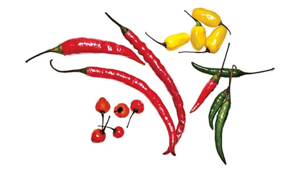 A User's Guide to Chili Peppers