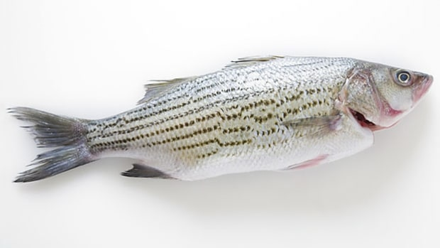 Get the right wild fish for home cooking.