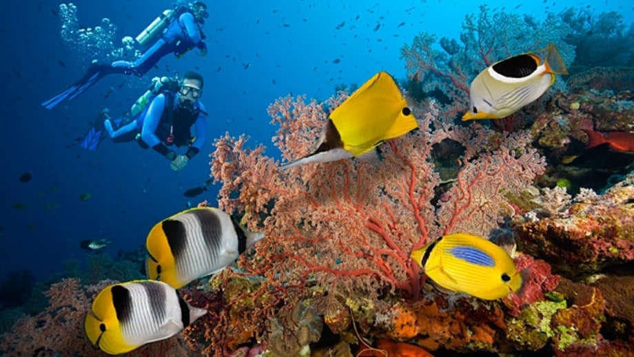Diving the Great Barrier Reef (Australia)