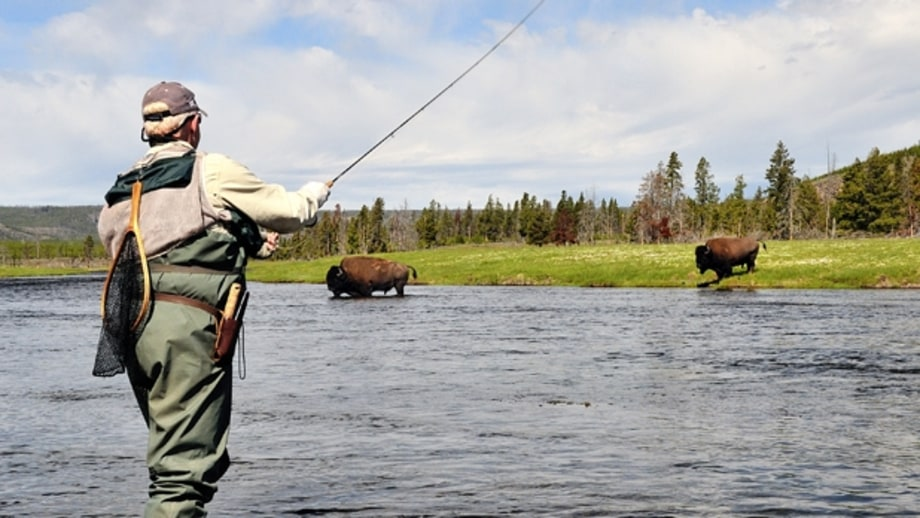 Firehole river the 17 best places to fly fish in montana for Best trout fishing near me