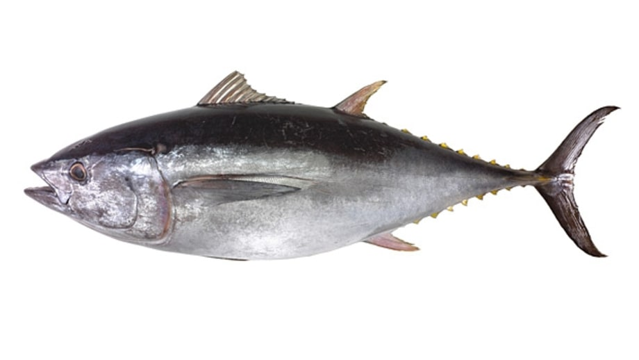 U.S. Atlantic Yellowfin Tuna