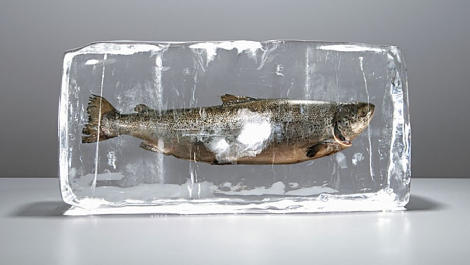 To freeze or not to freeze – and how to kill – fish.