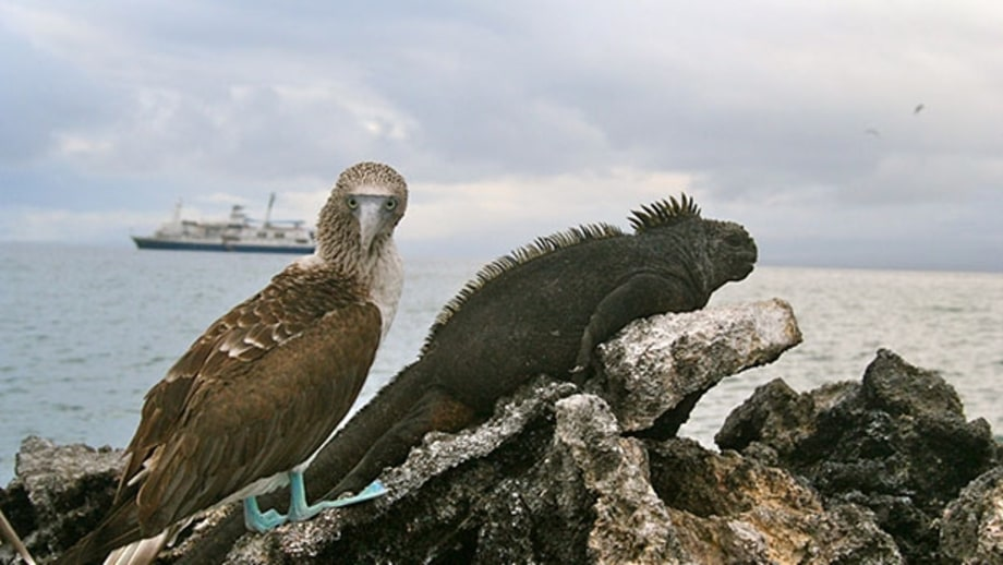 Andean Discovery: The Galapagos Islands