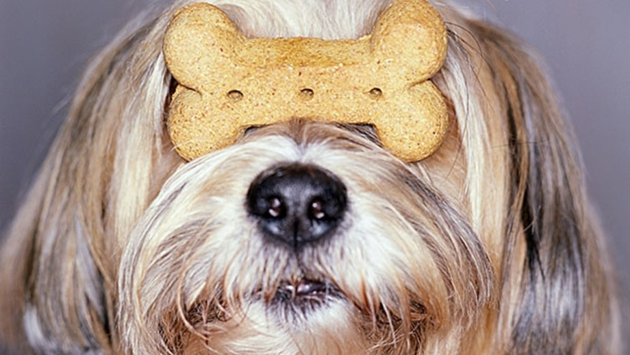 A Nutritionist's Guide to Buying Dog Treats