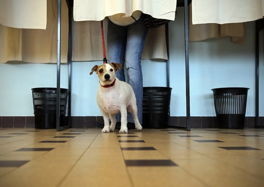 Voting by Dogs