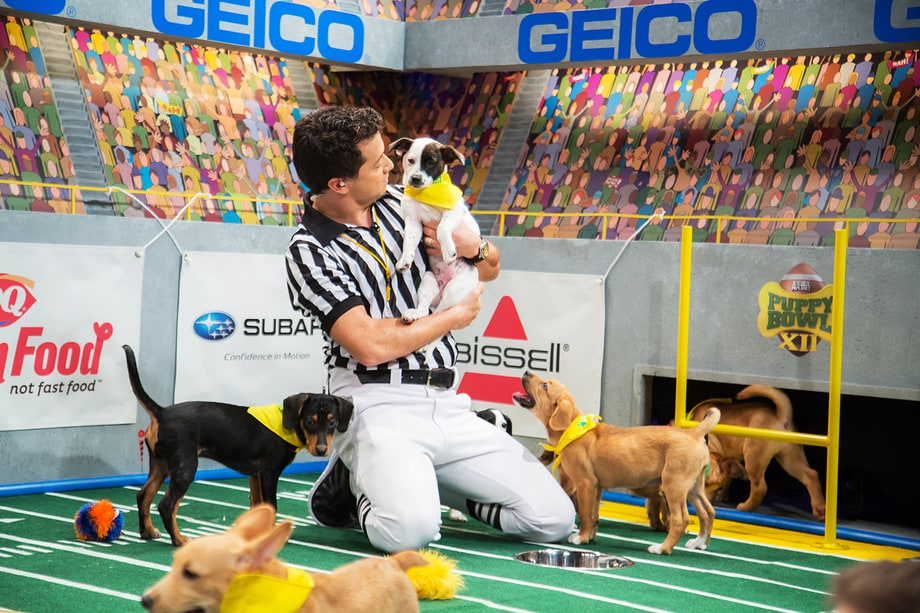 'Puppy Bowl XII': A Totally Necessary Gallery of Ridiculously Cute Baby Dogs