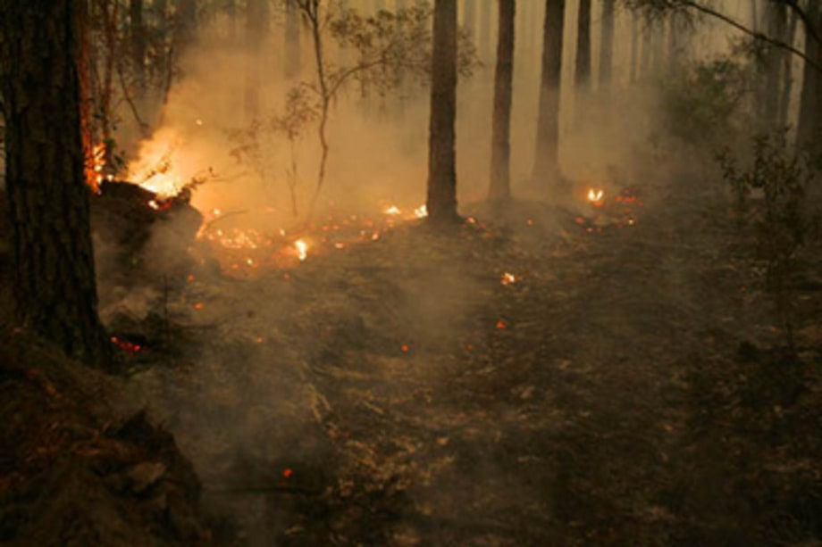 Climate Change Devistation Gallery:Florida fires