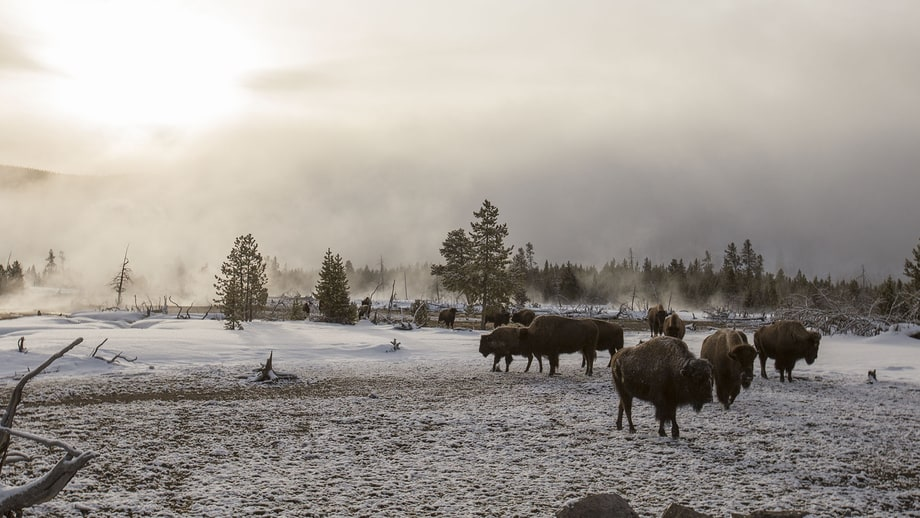 Weds 6/21: Great Yellowstone Thaw (PBS)