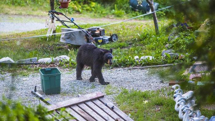 8 Insane Stories That Prove Bears Are Taking Over