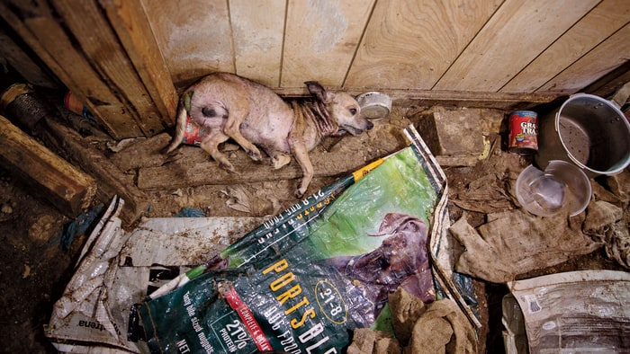 Every year, tens of thousands of dogs are born into the filthy conditions in unregulated puppy mills nationwide. Amiee Stubbs