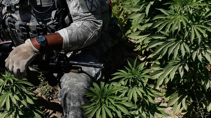 veterans and marijuana