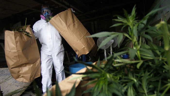 US Should Decriminalize Use of All Illicit Drugs, Rights Groups Say