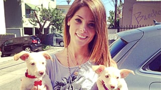 Ashley Greene Adopts Two Puppies After Dog Died in Tragic Apartment Fire: Picture