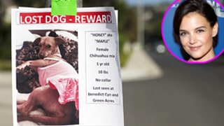 Suri Cruise Loses Her Dog in Los Angeles: See the Missing Poster