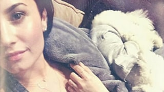 Demi Lovato Lets Wilmer Valderrama, Puppy Sleep in Her Lap:
