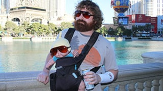 Zach Galifianakis Impersonator Makes $250,000 a Year as Hangover Character