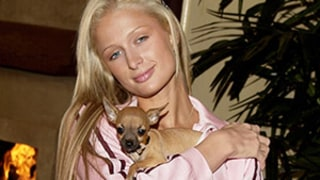 Paris Hilton's Beloved Dog Tinkerbell Dies, Star Mourns Her Death: