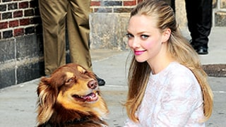 Amanda Seyfried Dresses Up Her Dog Finn: Watch Us Weekly's Loose Talk Video