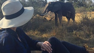 Nicky Hilton Casually Encounters an Elephant While Honeymooning With James Rothschild: Picture