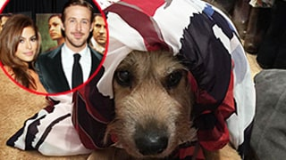 Eva Mendes Forces Ryan Gosling's Dog George to Wear Her Clothing Line