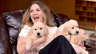 Drew Barrymore Plus Puppies on The Tonight Show With Jimmy Fallon? Yes Please!