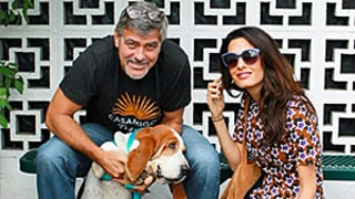 George Clooney, Amal Alamuddin Adopt a Basset Hound and We Die From the Cuteness: Photo