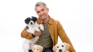 Cesar Millan's Tips on How to Prepare Your Dog for a Baby