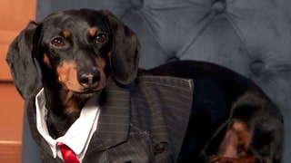 Crusoe the Celebrity Dachshund Plays Who Wore It Best, Picks the Celebrity Who Gets His Paws-Up: Watch