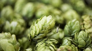 Hop-Infused Pomade for Better Beer-Head