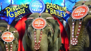 Ringling Bros. Circus to End After 146 Years