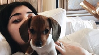 Kylie Jenner Shares Adorable Video of New Puppy, Penny: 'Welcome to the Family'