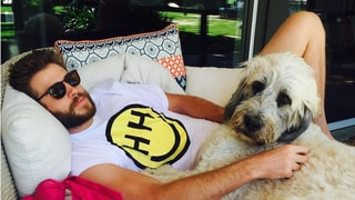 Miley Cyrus Shares Sweet Photo of Liam Hemsworth and His Dog: 'So Much Love in One Pic'
